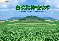 白菜种植技术